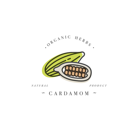 Packaging design template logo and emblem - herb and spice - cardamom. Logo in trendy linear style.
