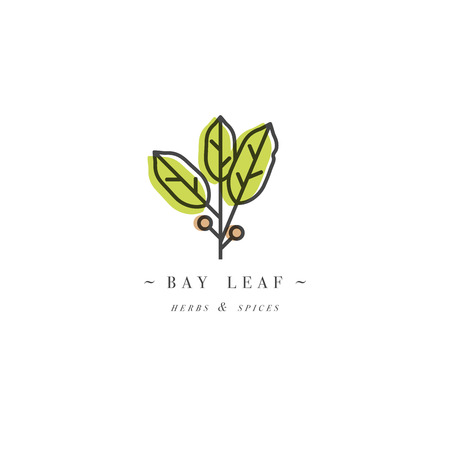 Packaging design template logo and emblem - herb and spice - bay leaf. Logo in trendy linear style.