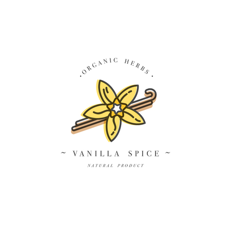 Packaging design template and emblem - herb and spice - vanilla flower and pods. Logo in trendy linear style.