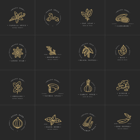 Vector set design templates monochrome logo and emblems - herbs and spices.