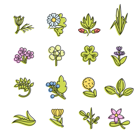 Vector colorful set design templates and emblems - healthy herbs and spices. Different medicinal, cosmetic plants.  in trendy linear style.