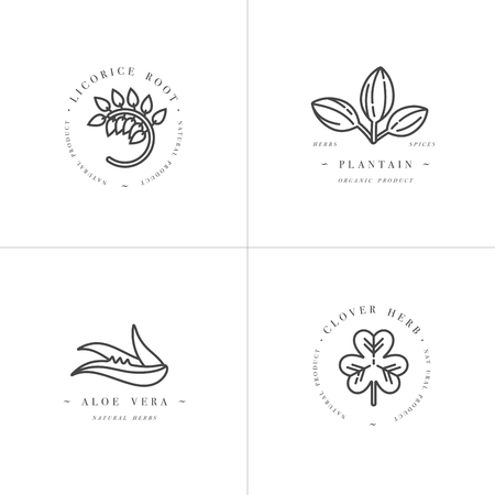 Vector onochrome set design templates and emblems - healthy herbs and spices. Different medicinal, cosmetic plants- licorice, aloe vera, plantain, clover. Logos in trendy linear style.