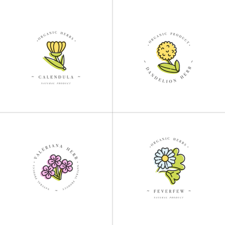 Vector colorful set design templates and emblems - healthy herbs and spices. Different medicinal, cosmetic plants- calendula, dandelion,valeriana and feverfew. Logos in trendy linear style.
