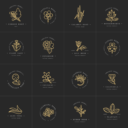Vector golden set design templates and emblems - healthy herbs and spices. Different medicinal, cosmetic plants.    trendy linear style.