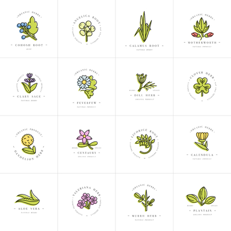 Vector colorful set design templates and emblems - healthy herbs and spices. Different medicinal, cosmetic plants. Logos in trendy linear style. Illustration