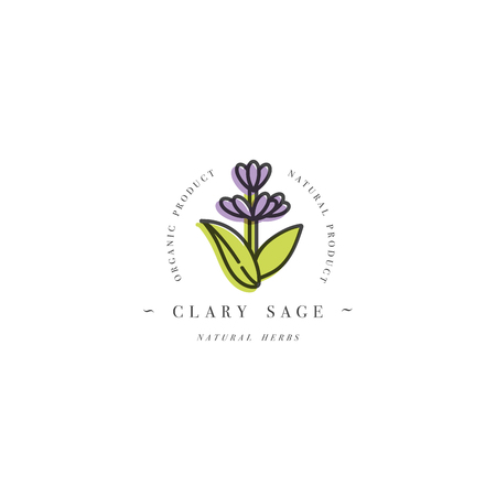 Vector colorful design template logo and emblem healthy herb- clary sage. Logo in trendy linear style isolated on white background.