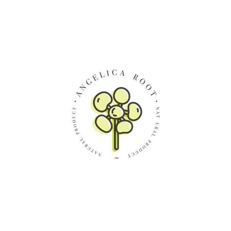 Vector colorful design template logo and emblem healthy herb- angelica root. Logo in trendy linear style isolated on white background.