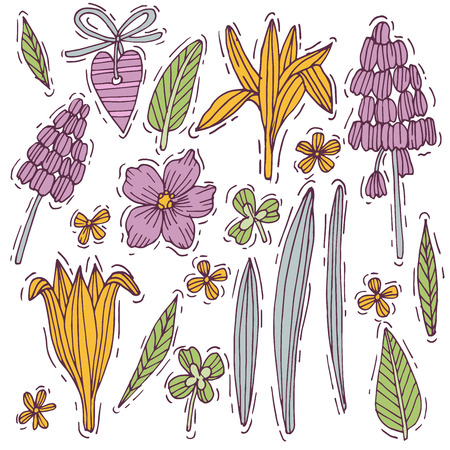 Colored hand drawn herb and flower set mouse hyacinth and crocus with violet. Engraved style flowers. Vector illustration