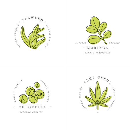 Vector design element and icon in linear style - chlorella, hemp seeds, seaweed and moringa - healthy eco food. Organic ingredient. Detox supplements.