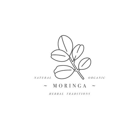 Vector design element and icon in linear style - moringa - healthy eco food. Organic ingredient. Detox supplements.
