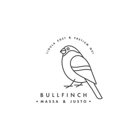 Vector linear design bullfinch on white background. Bullfinch emblems or badges