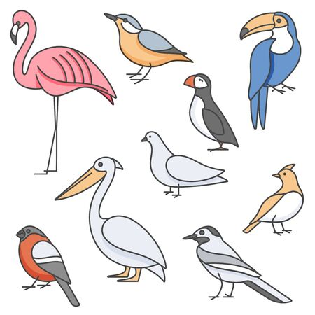 Vector colorful illustration set of birds - pigeon, nuthatch, flamingo, toucan and others in trendy linear style. Isolated on white