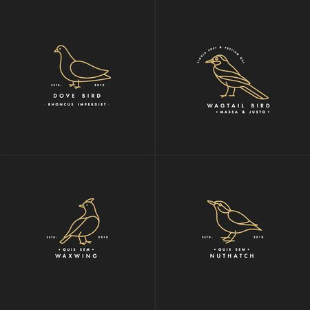 Vector golden color illustration set of birds - pigeon, nuthatch, waxwing, wagtail in trendy linear style. Çizim