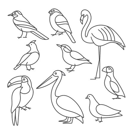 Vector illustration set of birds - pigeon, nuthatch, flamingo, toucan and others in trendy linear style. Isolated on white
