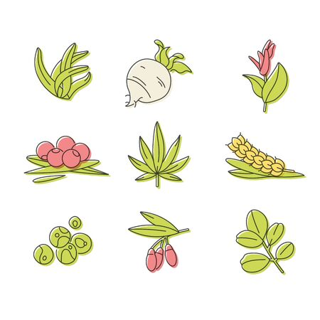 Superfoods line vector icons. Berries, powder, vegetables or fruits and seeds. Organic superfoods for health and diet. Detox and weightloss supplements 矢量图像