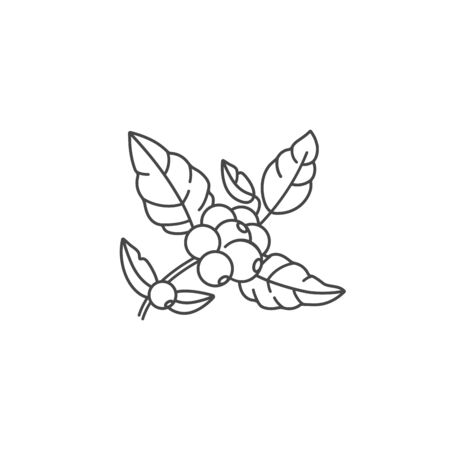 Vector line icon of coffee tree branch. Coffee plant linear logo.