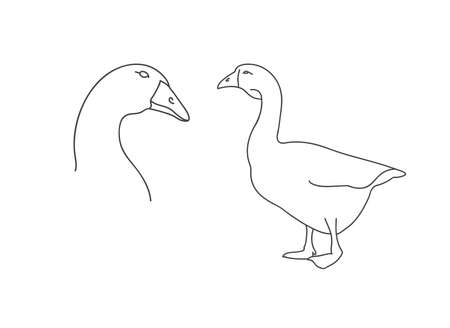 Vector linear illustration farm animal - goose, poultry isolated in white background.