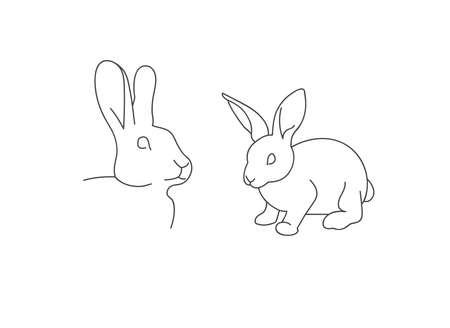 Vector linear illustration farm animal - rabbit isolated in white background.