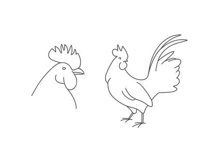 Vector linear illustration farm animal - rooster isolated in white background.