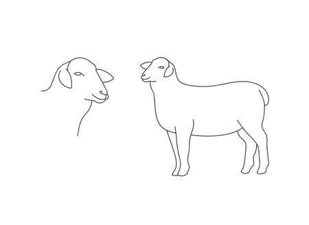 Vector linear illustration farm animal - sheep isolated in white background.