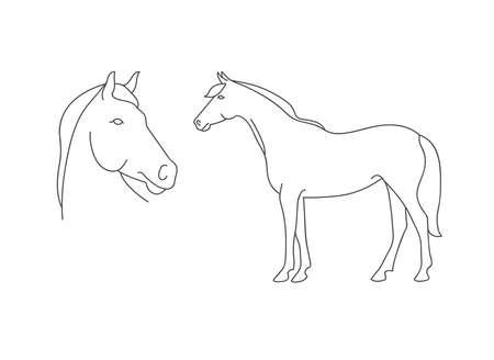 Vector linear illustration farm animal - horse isolated in white background. Stock Illustratie
