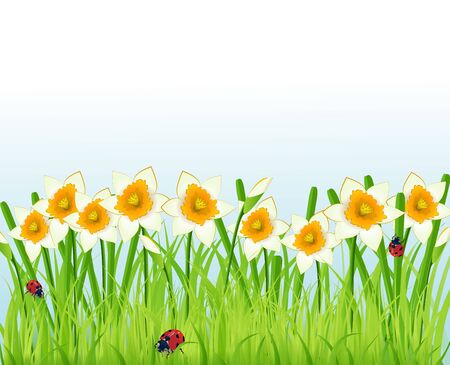 narcissus flowers and grass Stock Vector - 12496722