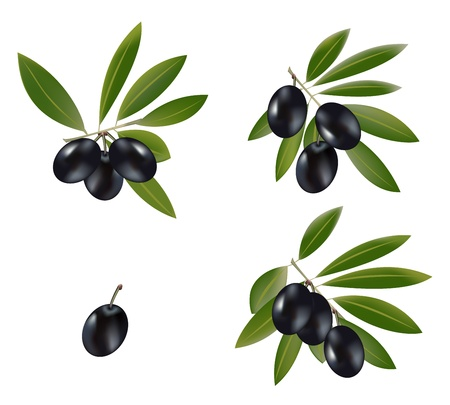 A set of black olive branches. Vector
