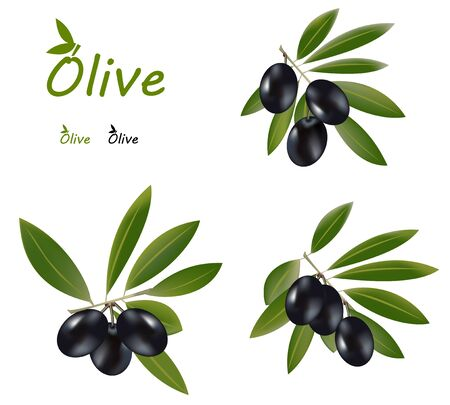 Olive olil branches, dark olives and an olive logo  Vector