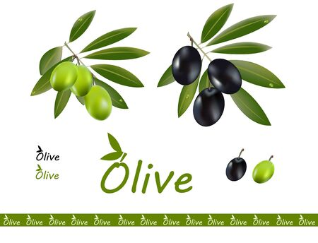 Two olive oil branches  Dark olive and green olive, a logo on the side Illustration