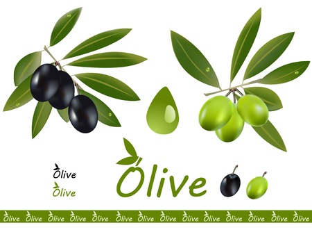 olive illustration: Two olive oil branches and a olive oil drop  Dark olive and green olive, a logo on the side Illustration