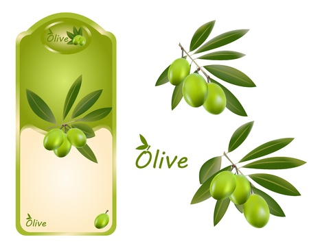 A green olive oil label width adittional branches on the side Vector