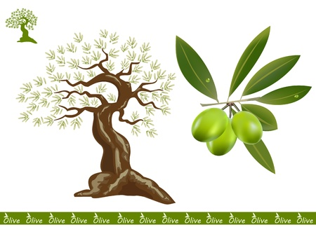 Olive trees for oliv products. A black olive branch on the side. Çizim