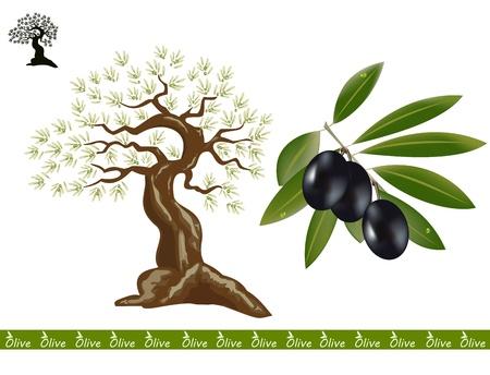 Olive trees for oliv products. A black olive branch on the side. Illustration