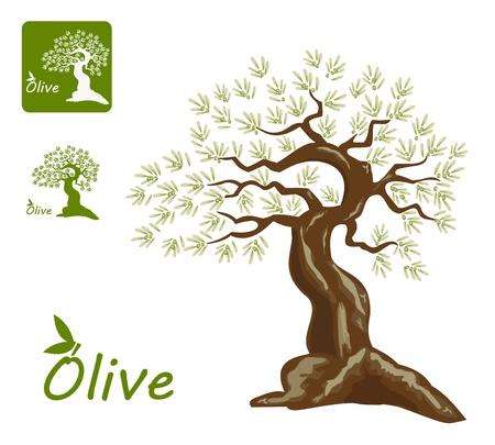 olijf: Olijfbomen voor oliv producten. Stel af zingt en een logo. Stock Illustratie