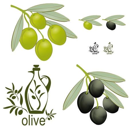 A set off vintage looking olive branches. Green and black olives width an interesting logo. Illustration