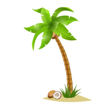 single tree: A  bent palm tree width coconuts isolate on white. Summer team. Illustration