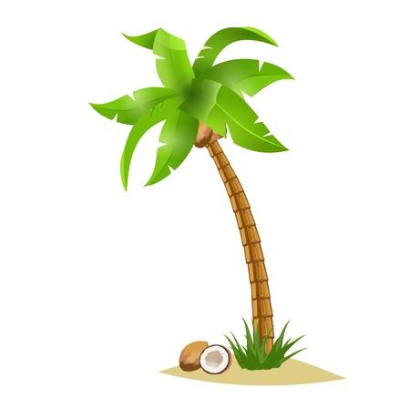 Eine gebogene Palme Breite Kokosnüsse isolieren auf weiß. Sommer-Team.