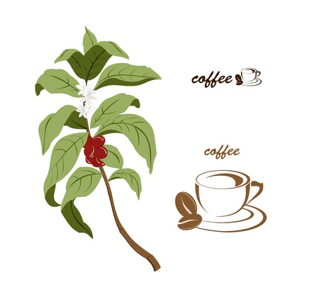 Coffee tree brunch width coffee beans and coffee flowers. A simplified coffee cup ideal for companies dealing width coffee.