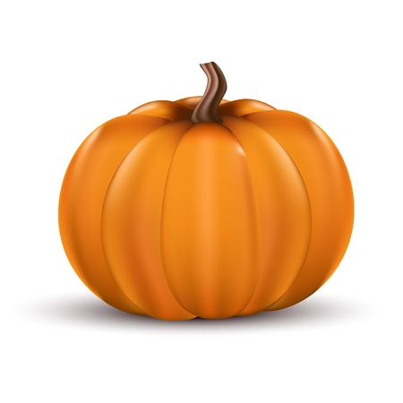 large pumpkin: Halloween pumpkin, seasonal vegetables. Illustration