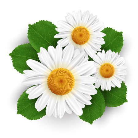 plain: Small white flowers and leafs isolated on white background. Vector illustration.