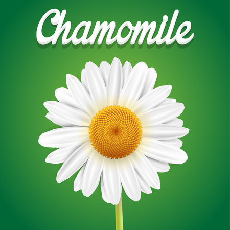 chamomile flower: Chamomile flower isolated on green background Illustration