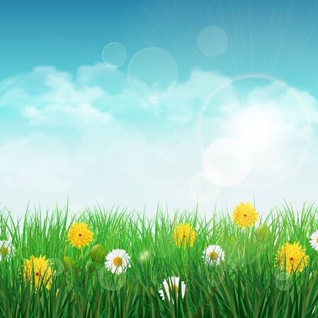 grass flower: Spring background with green grass and sky, one white daisy and dandelion flower.