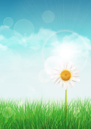 Spring background with green grass and sky, one white daisy flower Çizim