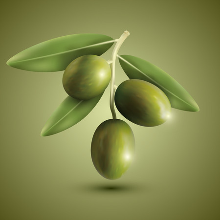 olives: Green olive branches on a green background, vector illustration.