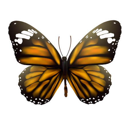 butterfly isolated: Butterfly isolated on white background, vector illustration. Illustration