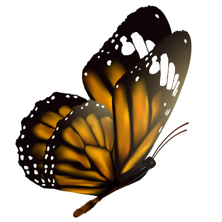 bonito: Mariposa del vuelo aislado en el fondo blanco, ilustración vectorial.