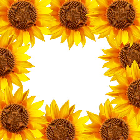 Sunflower flowers arranged in a circle. illustration.