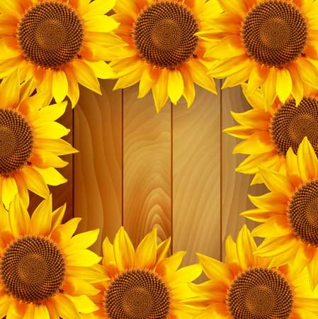 sunflower field: Sunflower flowers arranged in a circle on a wooden background. illustration.