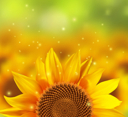 A blurred sunflower field with one flower in the front, illustration.