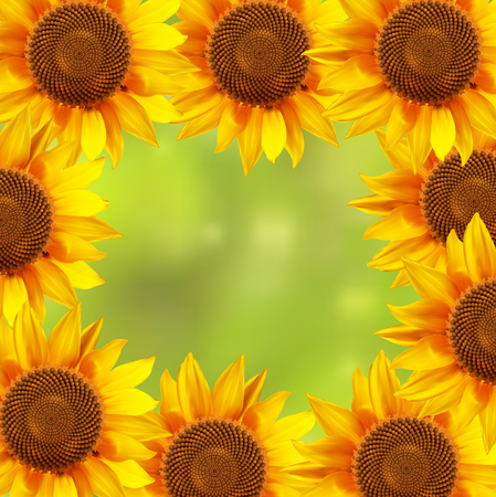 A circle of sunflowers with a blurred background. illustration.